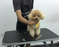Top 6 Dịch vụ spa cho thú cưng uy tín nhất ở TP.HCM