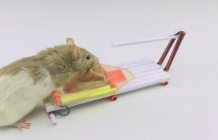 Top 7 Dịch vụ diệt chuột tại nhà uy tín nhất tại Hà Nội